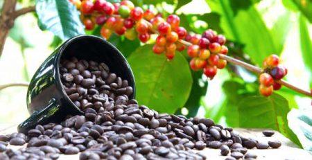 قهوه عمده عربیکا
